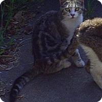 Adopt A Pet :: Mini - Monrovia, CA