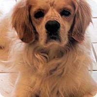 Adopt A Pet :: Maxwell - Sugarland, TX