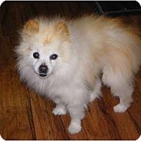 Adopt A Pet :: TY - Hesperus, CO