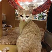 Adopt A Pet :: Sally Mae - Monroe, GA