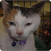 Adopt A Pet :: Delaney - Warren, MI