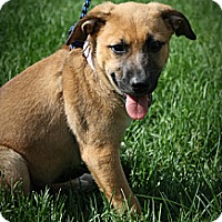 Adopt A Pet :: Lilac - Broomfield, CO