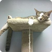 Adopt A Pet :: Moe - Lake Charles, LA