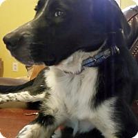 Adopt A Pet :: Harold - Marietta, GA