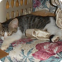 Adopt A Pet :: Magnum - College Station, TX