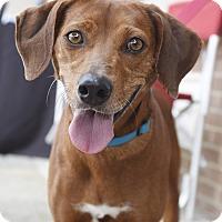 Adopt A Pet :: Rita - Knoxville, TN