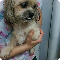Adopt A Pet :: Popeye - Pompton Lakes, NJ