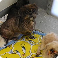 Adopt A Pet :: ANGEL MARIE - Sandusky, OH