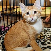 Adopt A Pet :: Cheese - Irvine, CA