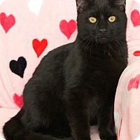 Adopt A Pet :: Bailey - St Louis, MO