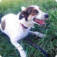 Adopt A Pet :: Sugar - Toronto, ON