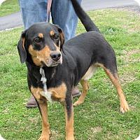 Adopt A Pet :: Trooper - Reeds Spring, MO