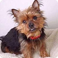 Adopt A Pet :: Jesse - Sudbury, MA