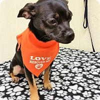 Adopt A Pet :: Lillabeth - Tavares, FL