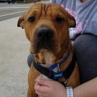 Adopt A Pet :: Hudson - Abbeville, LA