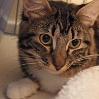 Adopt A Pet :: Bootie - Quail Valley, CA