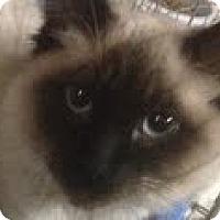 Adopt A Pet :: Darius - Modesto, CA