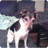 Adopt A Pet :: Lucky - Alliance, NE