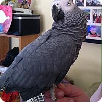 Adopt A Pet :: Daisy - Lenexa, KS