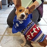 Adopt A Pet :: Fella - Wappingers, NY