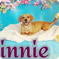 Adopt A Pet :: Minnie - Odessa, TX