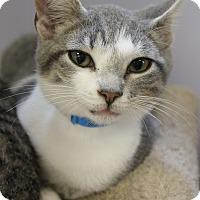 Adopt A Pet :: Marshall - Medina, OH