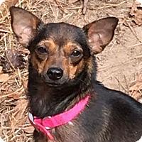 Adopt A Pet :: Pumpkin - Gainesville, FL