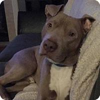 Adopt A Pet :: Leo - Salem, OR