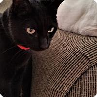 Adopt A Pet :: Krylon - Staten Island, NY
