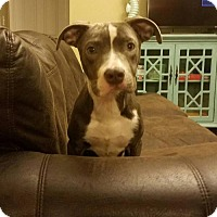Adopt A Pet :: Dorthy - Colonial Heights, VA