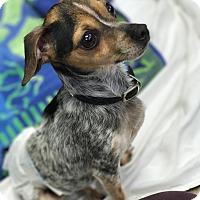 Adopt A Pet :: Nokie - Cleveland, OH