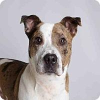 Adopt A Pet :: REMY - Murray, UT