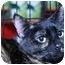 Photo 2 - Domestic Shorthair Cat for adoption in La Canada Flintridge, California - Mamacella