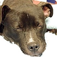 Adopt A Pet :: Prancer - Reisterstown, MD