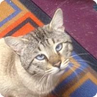 Adopt A Pet :: Sam I Am - North Haven, CT