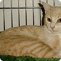 Adopt A Pet :: Belle - Medway, MA