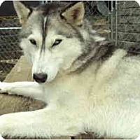 Adopt A Pet :: Star - Kettle Falls, WA
