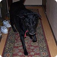 Adopt A Pet :: Shadow - Chewelah, WA