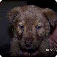 Adopt A Pet :: Fugdie - Honaker, VA