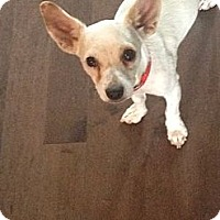 Adopt A Pet :: Cera - Calgary, AB