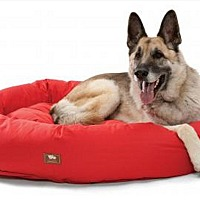 Adopt A Pet :: DONATIONS: BEDS & TOYS - Woodinville, WA