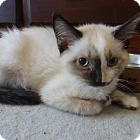 Adopt A Pet :: Jasmine - Colmar, PA