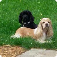 Adopt A Pet :: Renee - Menomonee Falls, WI