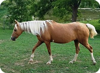 Pony - Other Mix for adoption in Mouth Of Wilson, Virginia - Ginger