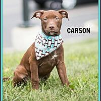 Adopt A Pet :: Carson - Elgin, IL