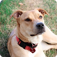 Adopt A Pet :: Goldie - Nashville, TN