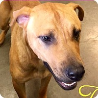 Adopt A Pet :: King-URGENT - Allen town, PA