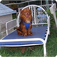 Adopt A Pet :: MIDGET - Warren, NJ