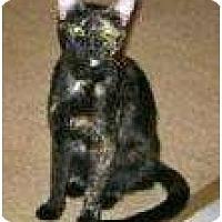 Adopt A Pet :: Molly II - Indian Rocks Beach, FL