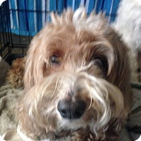 Adopt A Pet :: Skipy - Orlando, FL